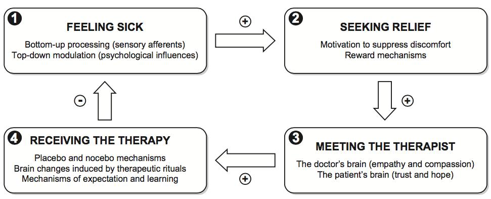 Figura 2: Schematizzazione dei meccanismi psicologici coinvolti nell'interazione tra medico e paziente. Tratto da: Benedetti, 2013a.