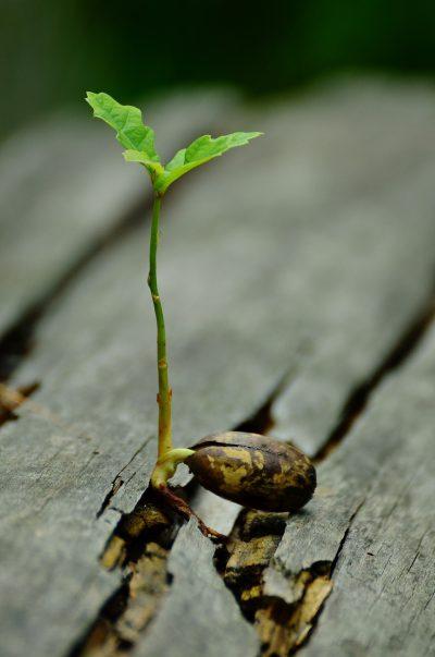crescita-personale-aiuto-psicologico-firenze